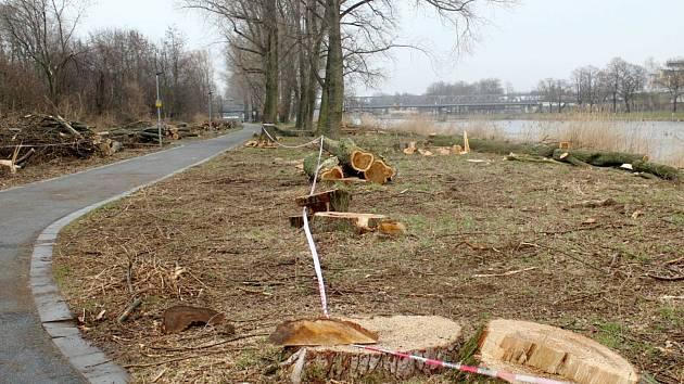 Situace u cyklostezky u Labe za železničním mostem po třech dnech kácení topolů.