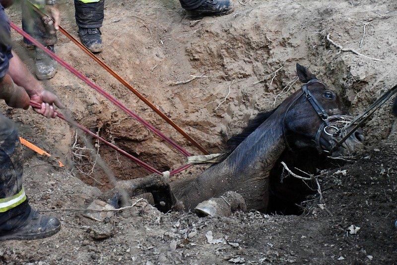 Na záchraně koně nedaleko Měchenic se podílelo pět jednotek.