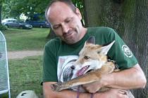 Šéf Záchranné stanice pro zraněné živočichy v Pátku Luboš Vaně se zachráněným liščetem