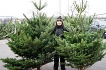 Vánoční stromy jsou už v prodeji