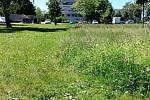 Nedosečený trávník v Nymburce.