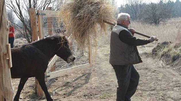 Vypuštění koní