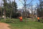 V lázeňském parku došlo z bezpečnostních důvodů k pokácení borovice.