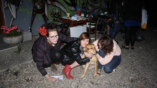 Festival Rock for dogs
