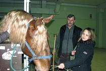 Na výstavě Zemědělec - Jaro s koňmi mají návštěvníci mimořádnou možnost vidět starokladrubského hřebce z linie Sacramoso, který se narodil v barvě ryzáka.