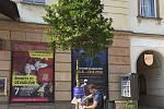 Hnutí spOLečně umístilo ve čtvrtek strom na Horní náměstí, na Žižkovo náměstí a v ulici 1. máje vedle hotelu Palác. Tento týden vysadili stromy i na Masarykově třídě a u kapličky na Nových Sadech.Foto: Deník/Ondřej Dluhí