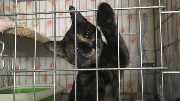 Olomoucký kočičí útulek v prostorech zverimexu v Dolní Novosadské
