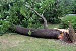 V Čechových sadech v Olomouci se zřítil mohutný strom