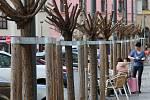 Ořezané koruny akátů na Dolním náměstí v Olomouci. 5. března 2020
