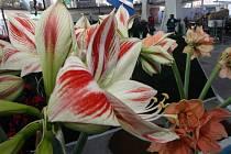 Příprava expozice jarní Flory v pavilonu A
