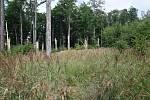 V posledních dvou dnech poškodil silný vítr 60 tisíc metrů krychlových dříví ve státních lesích spravovaných podnikem Lesy ČR na jihu Olomouckého kraje. Lesníci upozorňují houbaře, turisty, běžce a další návštěvníky lesa, aby zbytečně neriskovali. Stromy