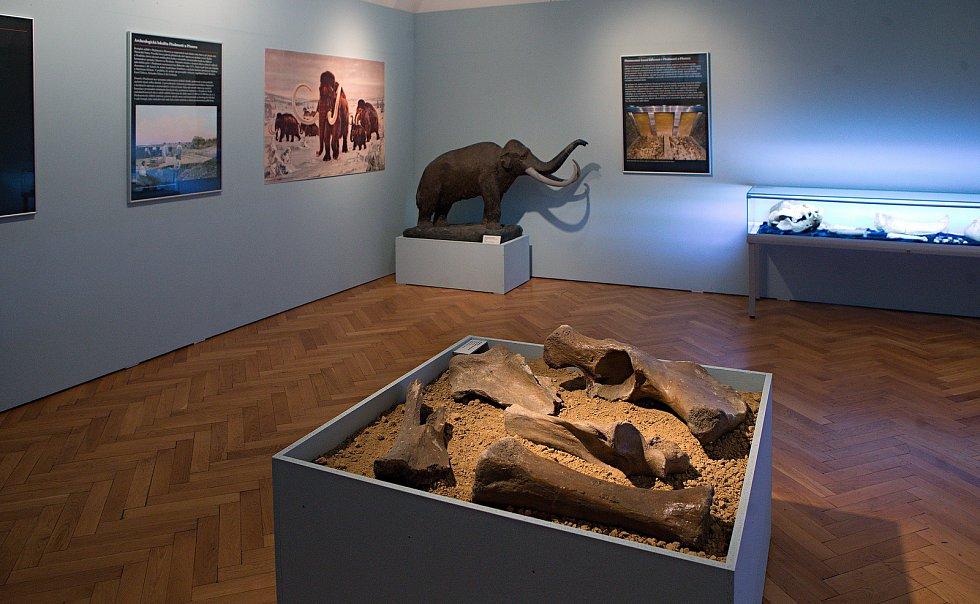Věstonická venuše  ve Vlastivědném muzeu Olomouc.