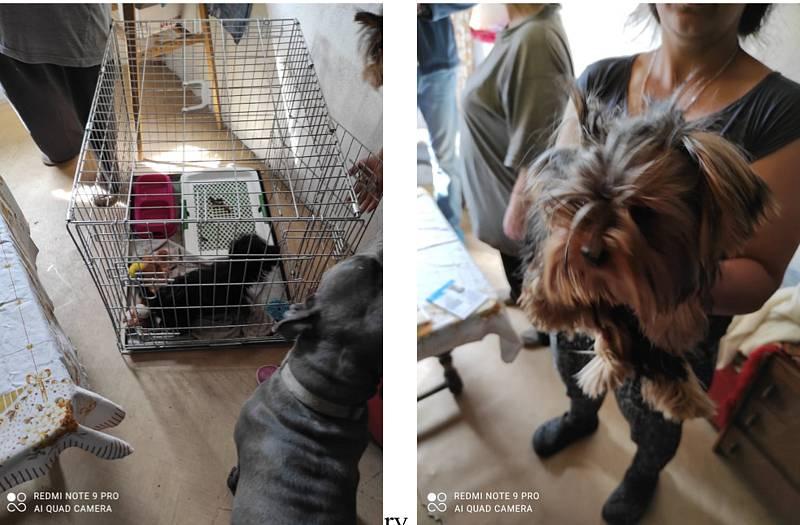 Organizovaná skupina ze Šternberka prodává psy nejasného původu, u kterých hrozí vážné zdravotní komplikace i úmrtí. Veterináři varují chovatele.