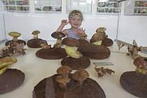 výstava plná hub