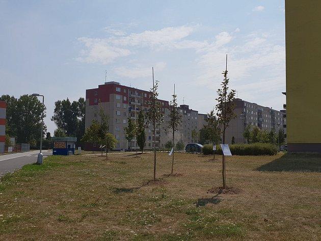 Hned na několika místech v Olomouci vyrostly přes noc listnáče. Na pozemcích města je, bez souhlasu vlastníka, v rámci kampaně před komunálními volbami umístilo hnutí Společně.