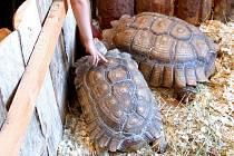 Výstava živých želv, opiček, plazů a pavouků v olomouckém Vlastivědném muzeu