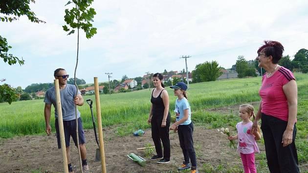 Do rodinného sázení větrolamu v Dobrochově se v červnu 2020 zapojilo několik generací