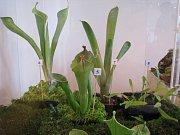 Výstava masožravých rostlin ve Vlastivědném muzeu v Olomouci