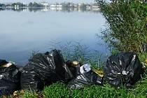 Lahůdky pro potkany na Nákle: odpadky a mlž s názvem slávička mnohotvárná