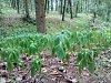 Přírodě chybí voda. V lesích uvadají byliny i listy stromů.