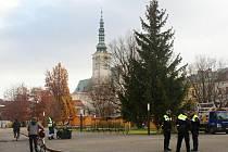 Šestnáctimetrový vánoční smrk ze Seloutek na náměstí TGM v Prostějově