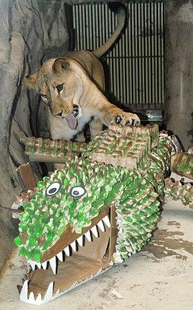 Lvice Micka opouští olomouckou zoo