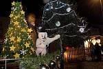 Rozsvícení vánočního stromu v Uničově. 29. listopadu 2020