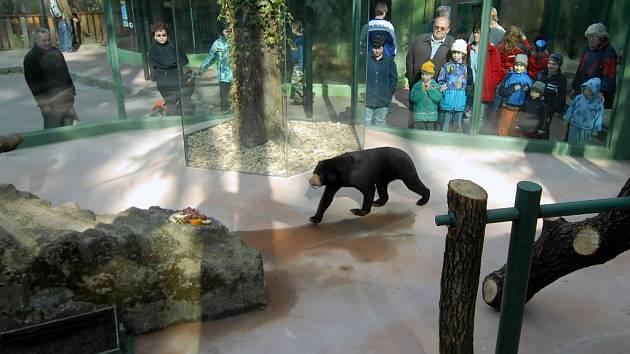 Víc prostoru a průlezky pro medvědy malajské.