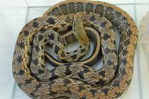 Had, který se plazil po dvorku v Horce nad Moravou
