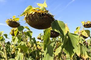 Důsledkem globálního oteplování jsou horká léta a nedostatek vláhy. V uplynulých letech trápilo sucho i Českou republiku