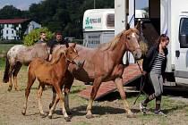 Týraní koně s Měníka se stěhují k majitelce