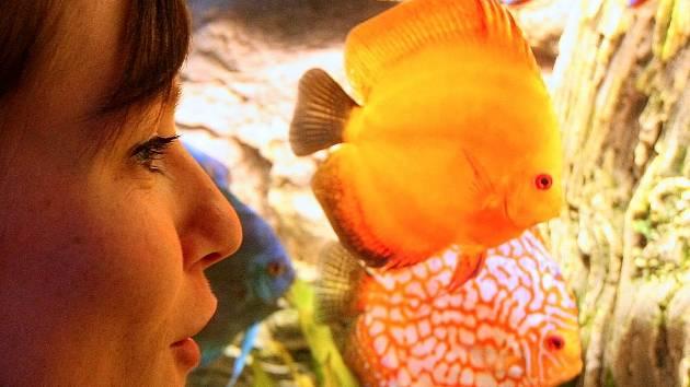 Akvaristé a teraristé se sejdou na olomouckém výstavišti.