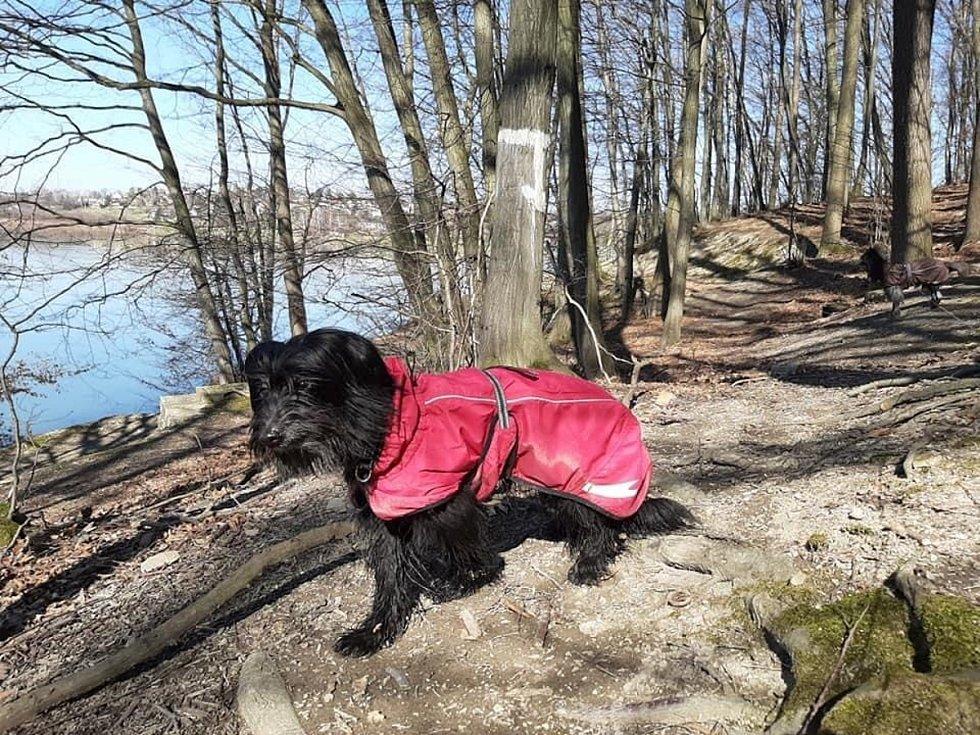 Na zimní procházce