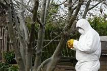 Deratizér zkoumá přemnoženou housenku, která napadá vegetaci v Ondrášově