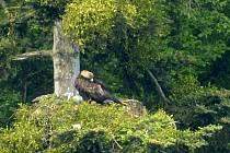 Květen 2016. Na Libavé počtvrté zahnízdil pár orlů skalních. Protože nechtěl být rušen, vybudoval si nové hnízdo na bezpečném, avšak pro fotografy podstatně hůře dostupném místě. Hnízdo je vidět pouze přes údolí ze vzdálenosti 370 metrů.