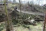 Odstraňování následků vichřice z 11. 3. 2019 v olomoucké zoo