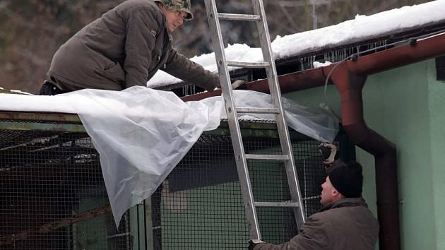 V olomoucké zoo na Svatém Kopečku zabezpečovali voliéry, aby maximálně ochránili ptactvo před možným zavlečením nákazy volně žijícími opeřenci.
