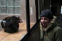 Během návštěvy olomoucké zoologické zahrady se návštěvníci mohou zúčastnit zooinventury, který trvá do 9. února