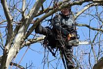 Stromolezci provádí ořez stromů v olomouckém ASO parku