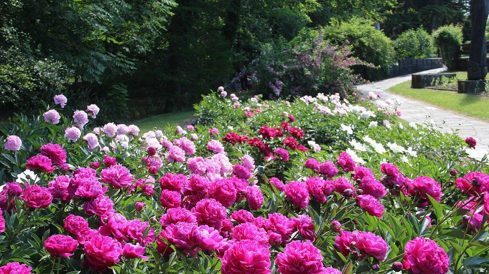 Botanická zahrada výstaviště Flora Olomouc a rozárium je během Víkendu otevřených zahrad přístupné od 9.30 do 18 hodin. K vidění je například záhon s několika desítkami druhů pivoněk.