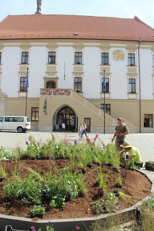 Historické centrum Olomouc oživí letní květinová výzdoba. Zahradníci z výstaviště Flora již sázejí letničky.