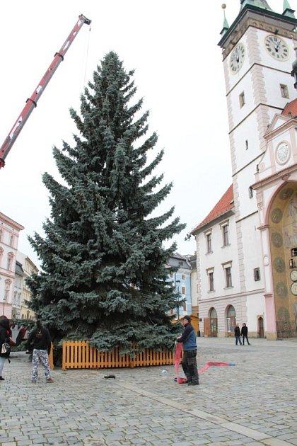 Kácení, převoz a stavění olomouckého vánočního stromu – 16.11.2014
