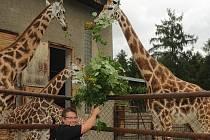 Ve čtvrtek 14. července se v olomoucké zoo dočkala křtu mladá samička žirafy a dvě samičky mravenečníků stromových. Kmotry byli primátor města Olomouce Martin Novotný a jeho náměstkové Jan Holpuch a Martin Major