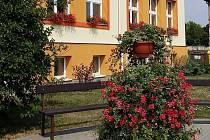 Drobné červené kvítky převislých pelargonií krášlí už druhým rokem Hněvotín na Olomoucku. Rostlinky, kterým lidově říkáme muškáty, ozdobily stejně jako loni rodinné domy, ale i školu, obecní úřad nebo sloupy pouličního osvětlení.