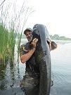 Jakub Tiefenbach v sobotu chytil na Chomoutovském jezeře sumce měřícího neuvěřitelných 224 cm.Jedná se o zatím největšího sumce uloveného letos při lovu non stop v této lokalitě.Archiv autora