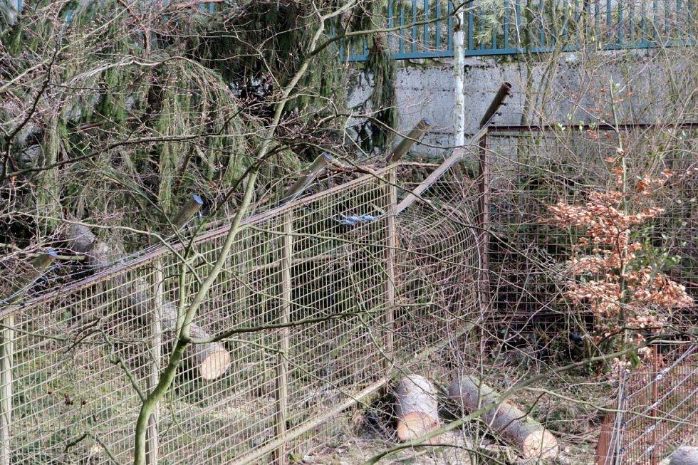 Výběh medvěda baribala. Odstraňování následků vichru v olomoucké zoo - 27.3.2019