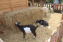 Smetanovy sady, kozy