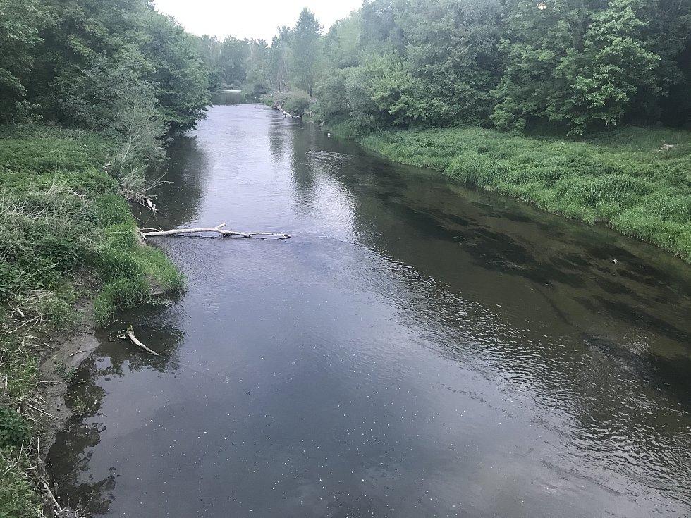 Sucho postihlo i lužní lesy Litovelského Pomoraví.  Hladina Moravy ve Střeni dosahovala ve středu 54 cm. (19.května 2020)