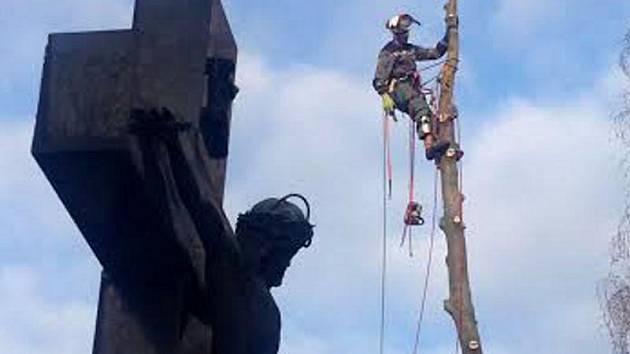 Se zatajeným dechem v pátek odpoledne lidé přihlíželi práci dřevorubců na centrálním hřbitově v Olomouci-Neředíně