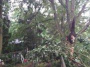 Následky čtvrteční odpolední bouřky v Olomouckém kraji
